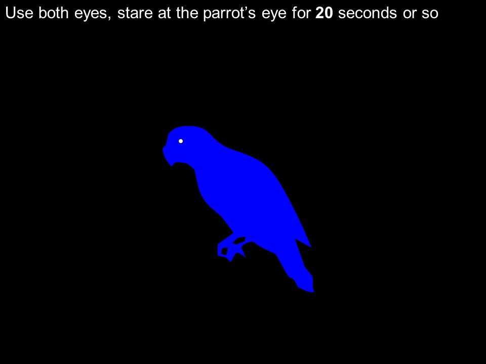 Use both eyes, stare at the parrots eye for 20 seconds or so