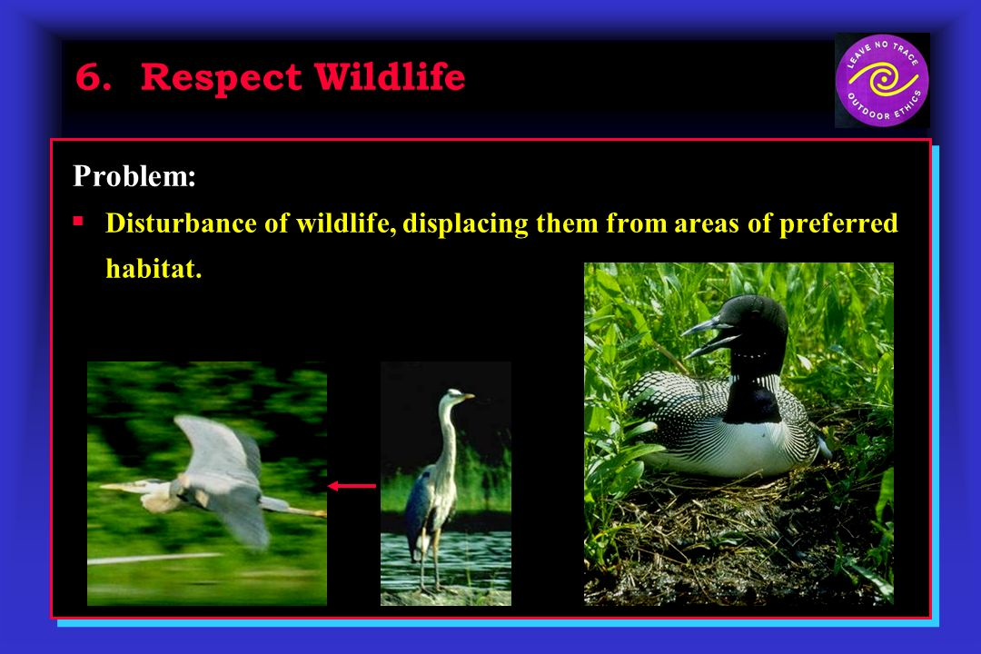 6. Respect Wildlife Disturbance of wildlife, displacing them from areas of preferred habitat. Problem: