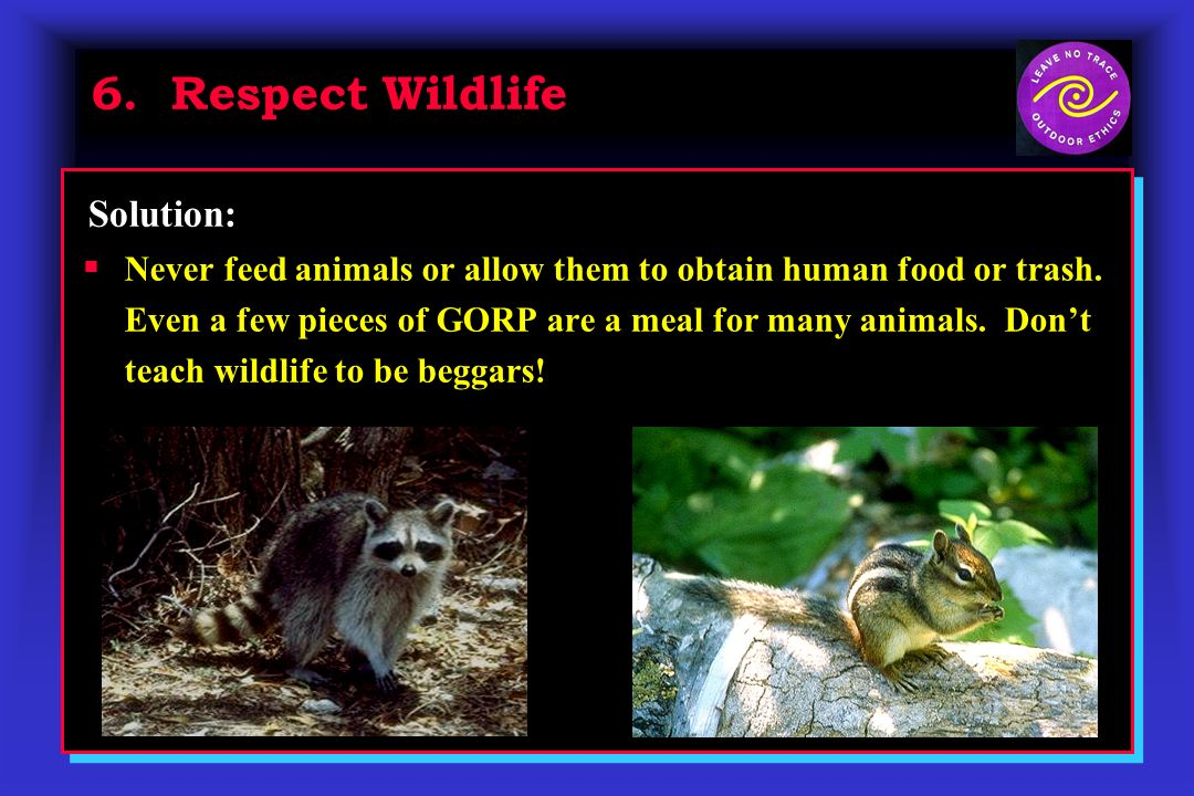 6. Respect Wildlife Never feed animals or allow them to obtain human food or trash. Even a few pieces of GORP are a meal for many animals. Dont teach