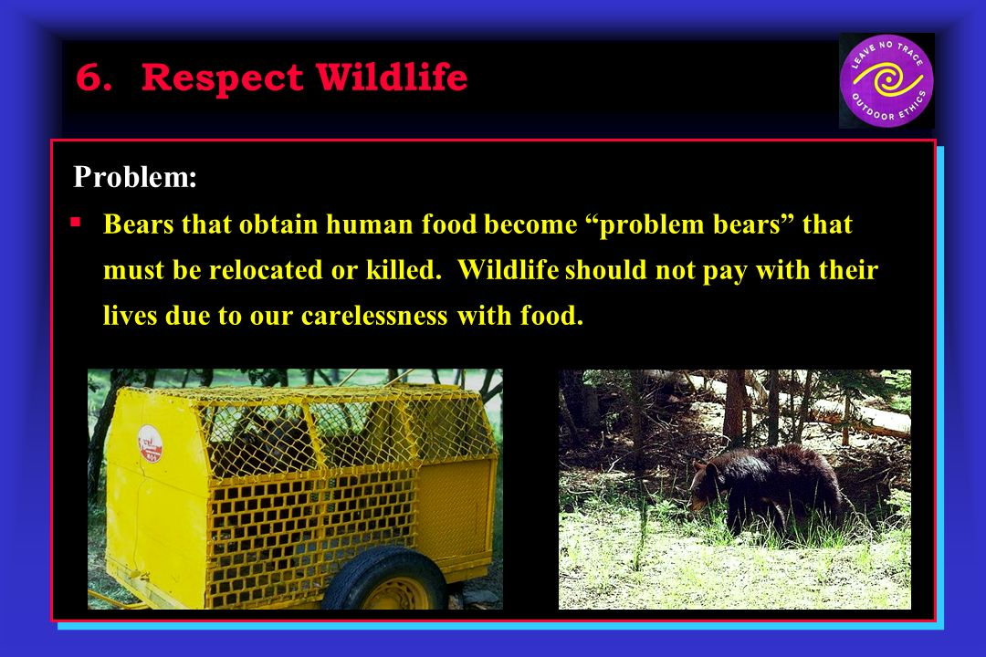 6. Respect Wildlife Bears that obtain human food become problem bears that must be relocated or killed. Wildlife should not pay with their lives due t