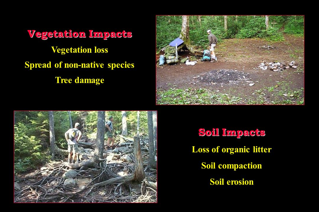 Vegetation Impacts Vegetation loss Spread of non-native species Tree damage Soil Impacts Loss of organic litter Soil compaction Soil erosion