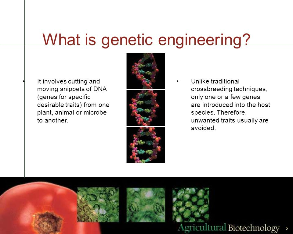 5 It involves cutting and moving snippets of DNA (genes for specific desirable traits) from one plant, animal or microbe to another. What is genetic e
