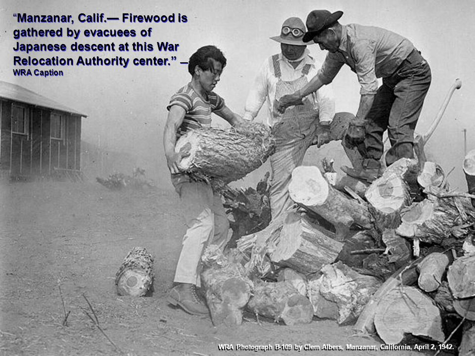 Manzanar, Calif. Firewood is gathered by evacuees of Japanese descent at this War Relocation Authority center. WRA Caption WRA Photograph B-109 by Cle
