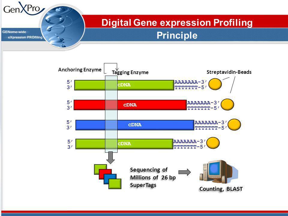 5353 AAAAAAA-3 TTTTTTT-5 cDNA Streptavidin-Beads 5353 5353 5353 AAAAAAA-3 TTTTTTT-5 AAAAAAA-3 TTTTTTT-5 AAAAAAA-3 TTTTTTT-5 Tagging Enzyme Anchoring E