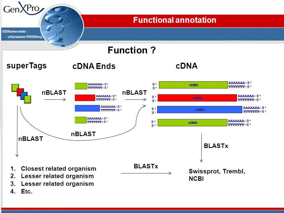 Functional annotation cDNA Ends superTags cDNA Function ? Swissprot, Trembl, NCBI nBLAST BLASTx nBLAST 1.Closest related organism 2.Lesser related org