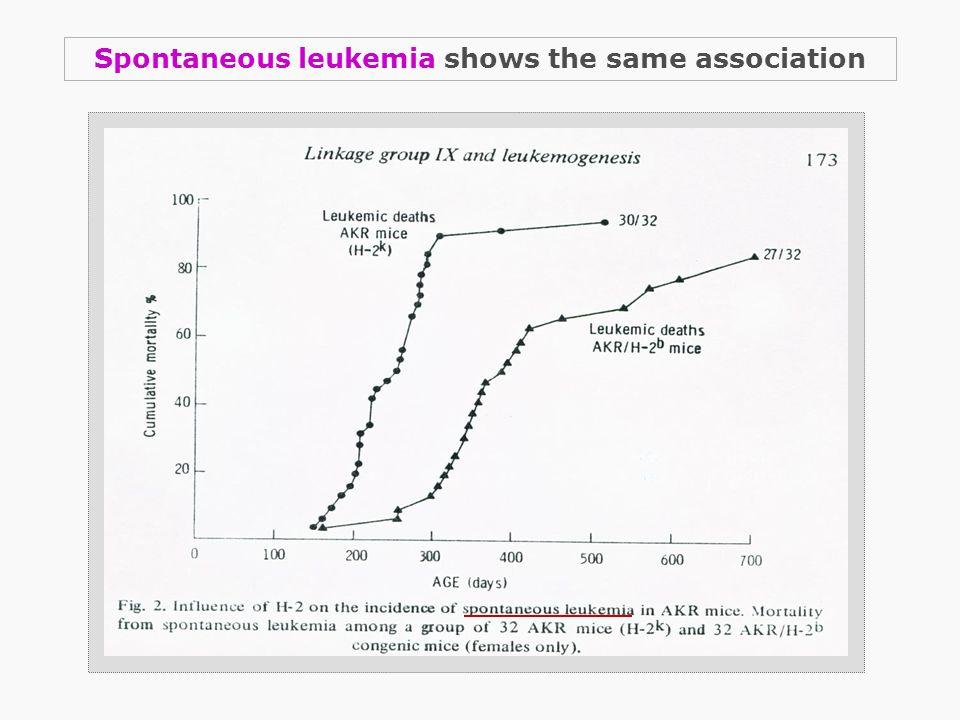 Spontaneous leukemia shows the same association