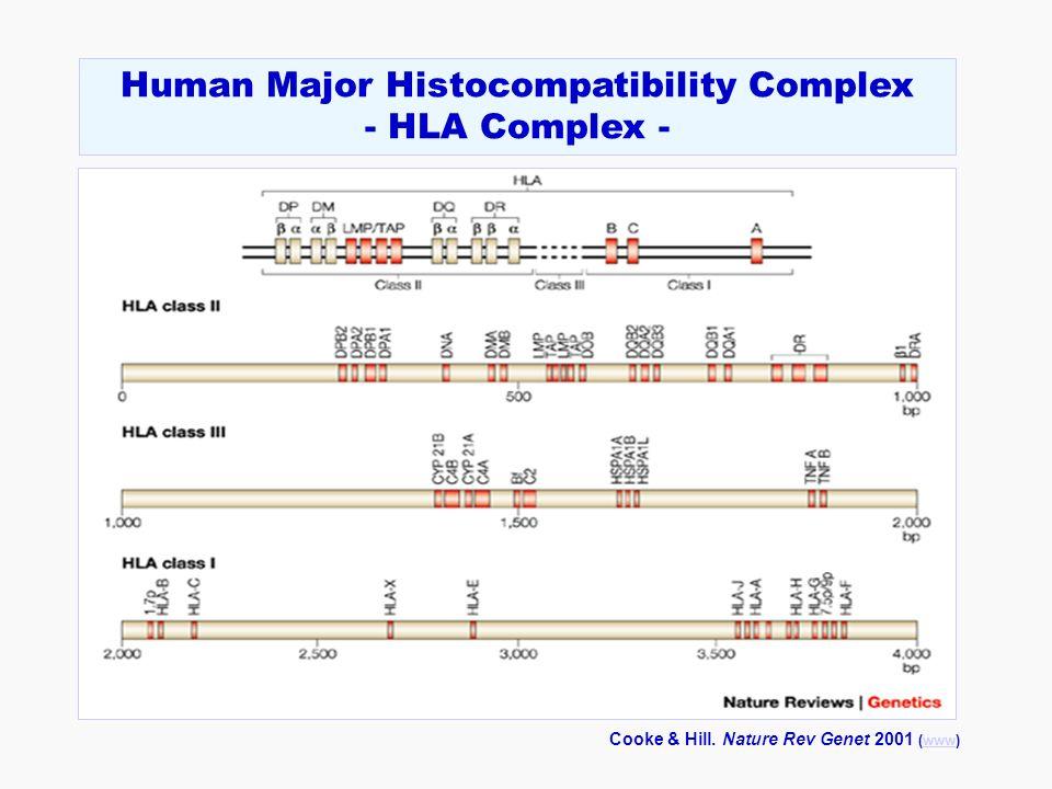 Cooke & Hill. Nature Rev Genet 2001 (www)www Human Major Histocompatibility Complex - HLA Complex -
