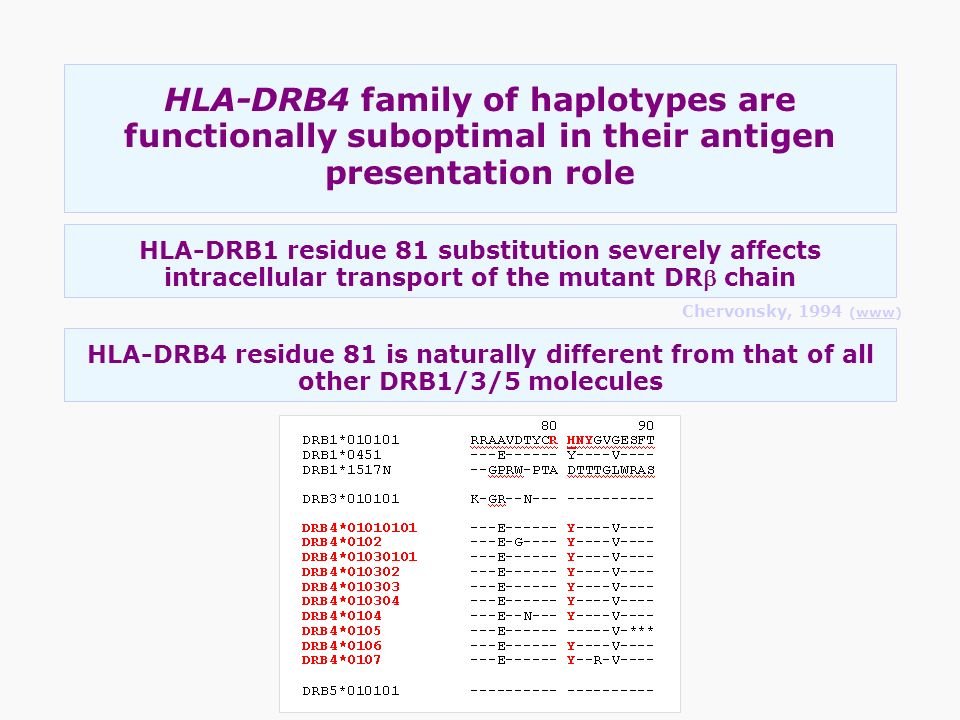 HLA-DRB4 family of haplotypes are functionally suboptimal in their antigen presentation role HLA-DRB1 residue 81 substitution severely affects intrace