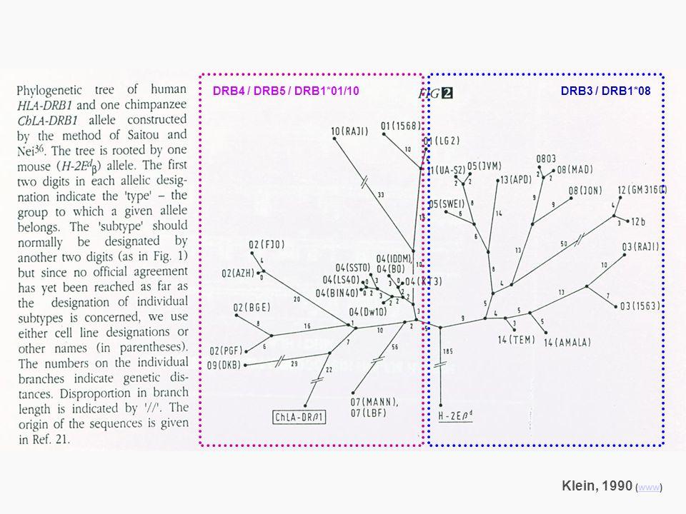 Klein, 1990 (www)www DRB4 / DRB5 / DRB1*01/10DRB3 / DRB1*08