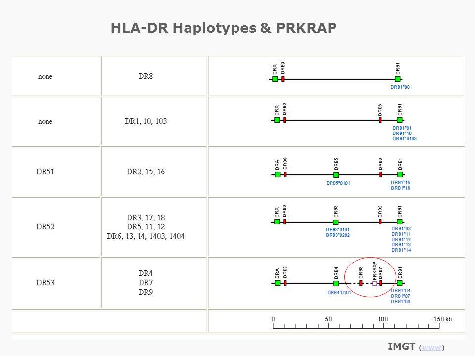 IMGT (www)www HLA-DR Haplotypes & PRKRAP