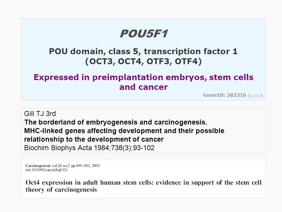 POU5F1 POU domain, class 5, transcription factor 1 (OCT3, OCT4, OTF3, OTF4) Expressed in preimplantation embryos, stem cells and cancer GeneID: 282316