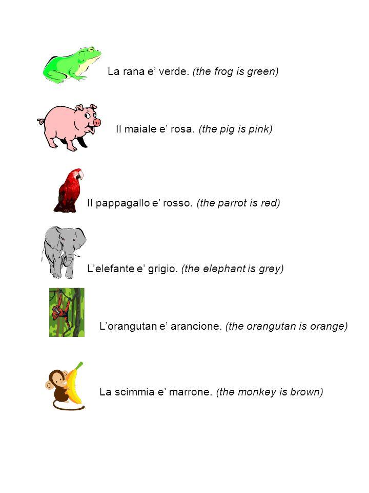 La rana e verde. (the frog is green) Il maiale e rosa.