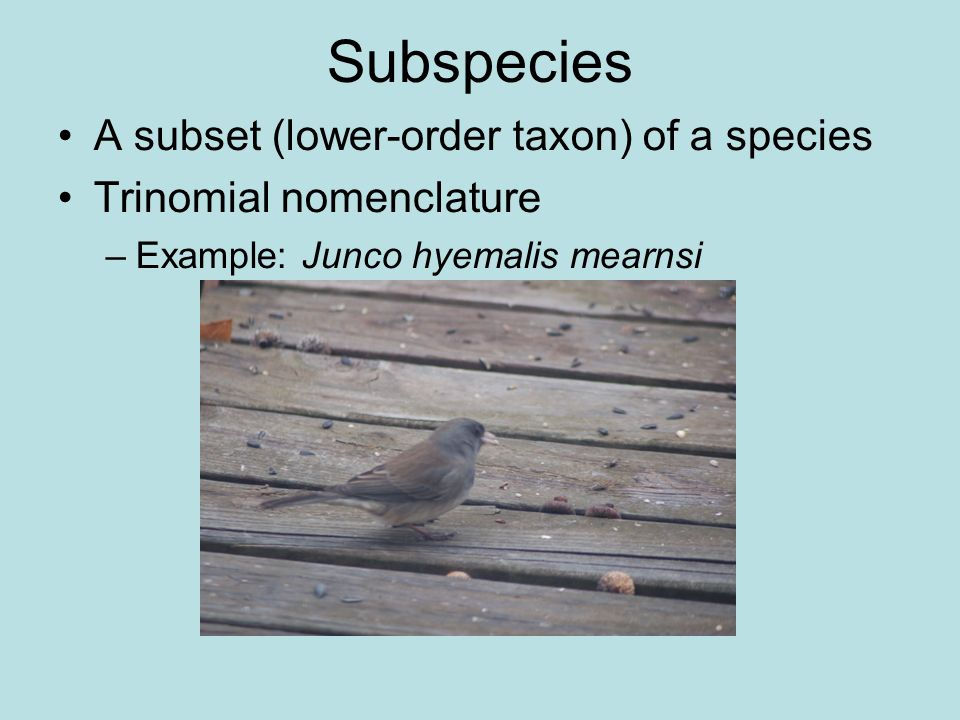 Subspecies A subset (lower-order taxon) of a species Trinomial nomenclature –Example: Junco hyemalis mearnsi