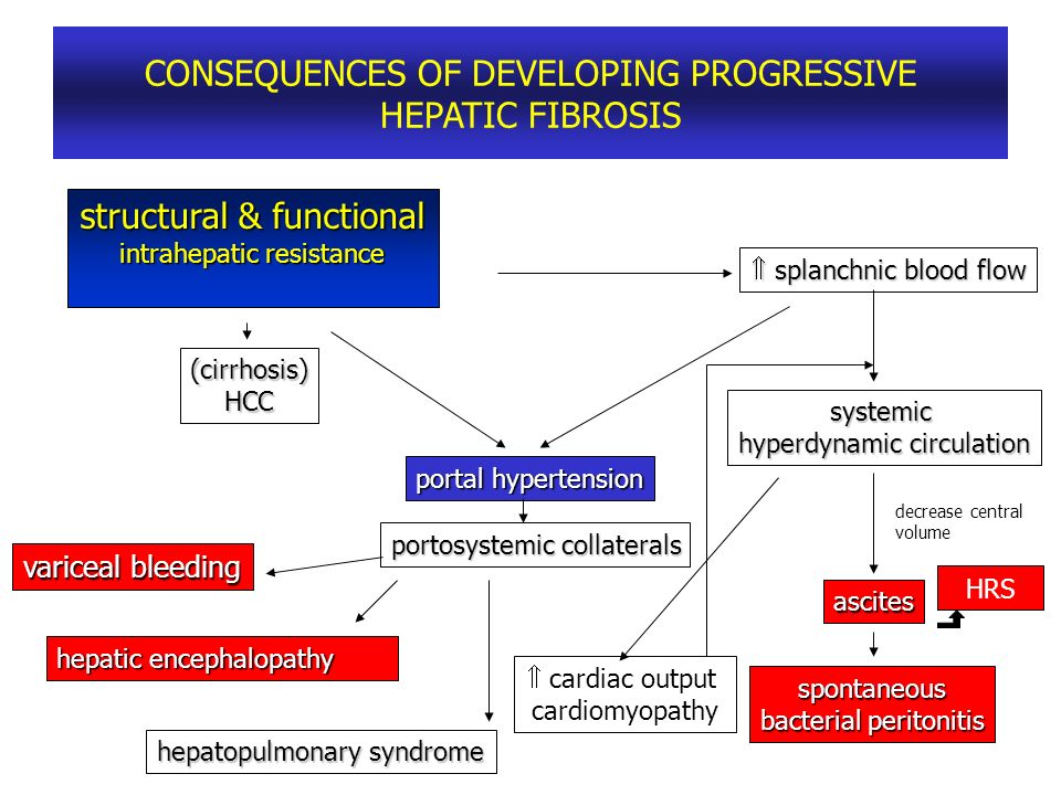 CONSEQUENCES OF DEVELOPING PROGRESSIVE HEPATIC FIBROSIS structural & functional intrahepatic resistance splanchnic blood flow splanchnic blood flow (c