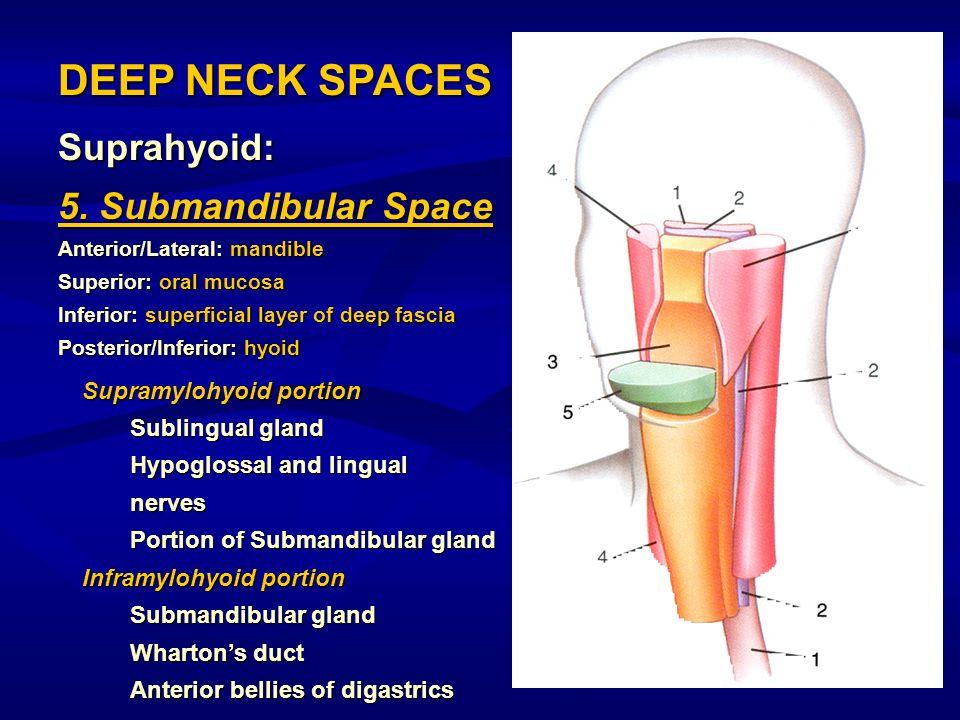 Suprahyoid: 5. Submandibular Space Anterior/Lateral: mandible Superior: oral mucosa Inferior: superficial layer of deep fascia Posterior/Inferior: hyo