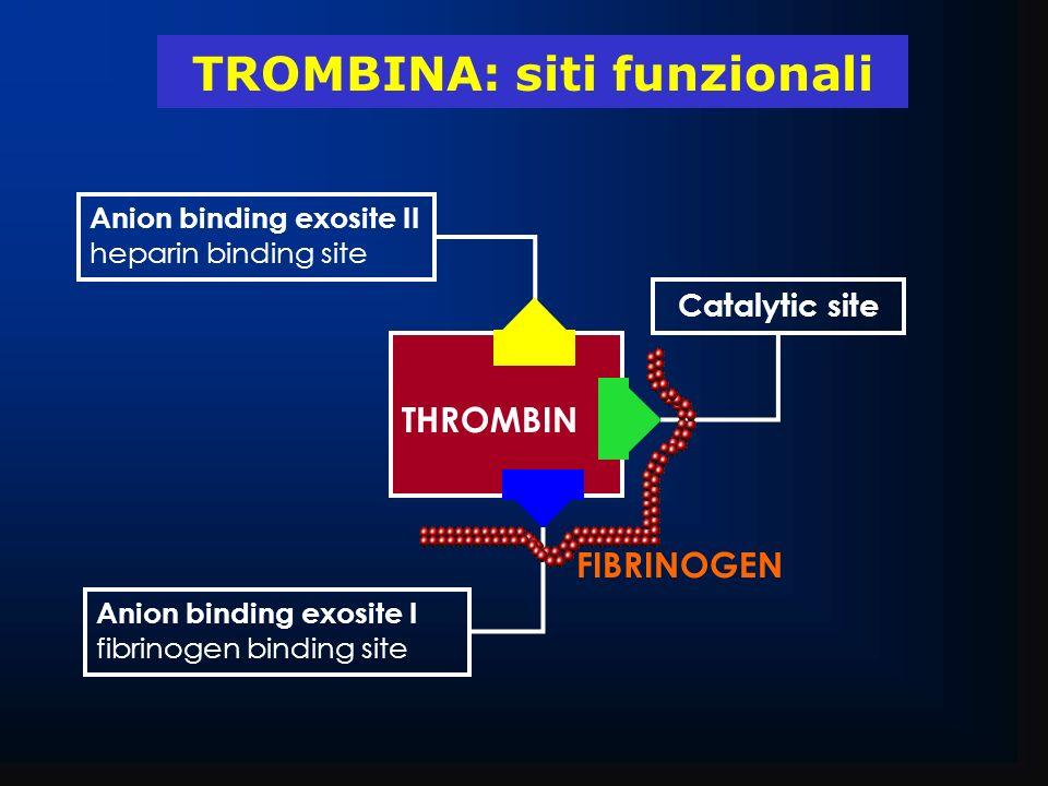 THROMBIN FIBRINOGEN Catalytic site Anion binding exosite I fibrinogen binding site Anion binding exosite II heparin binding site TROMBINA: siti funzio