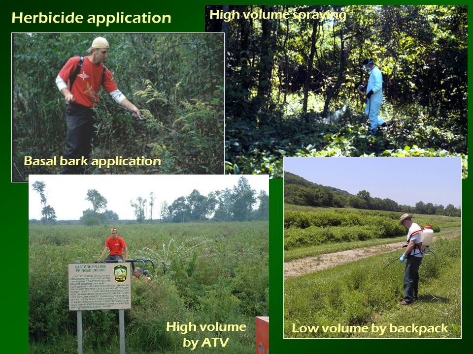 Basal bark application Low volume by backpack High volume spraying High volume by ATV Herbicide application