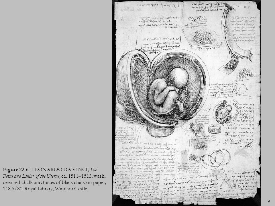 9 Figure 22-6 LEONARDO DA VINCI, The Fetus and Lining of the Uterus, ca. 1511–1513. wash, over red chalk and traces of black chalk on paper, 1 8 5/8.