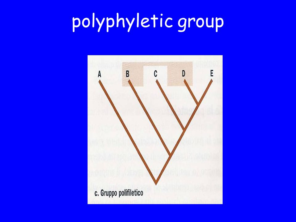 polyphyletic group