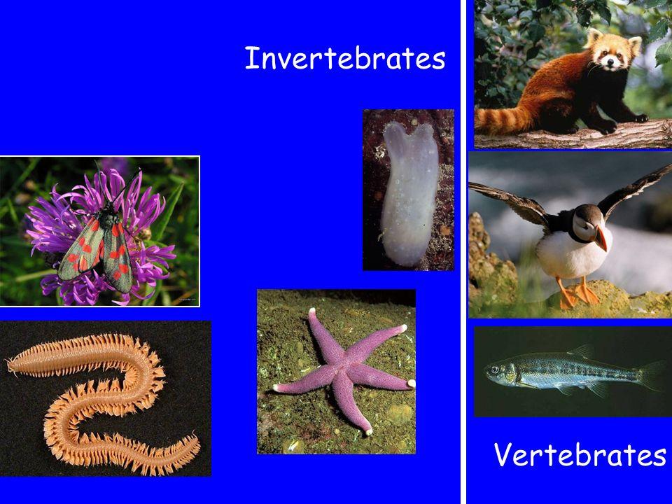 Invertebrates Vertebrates