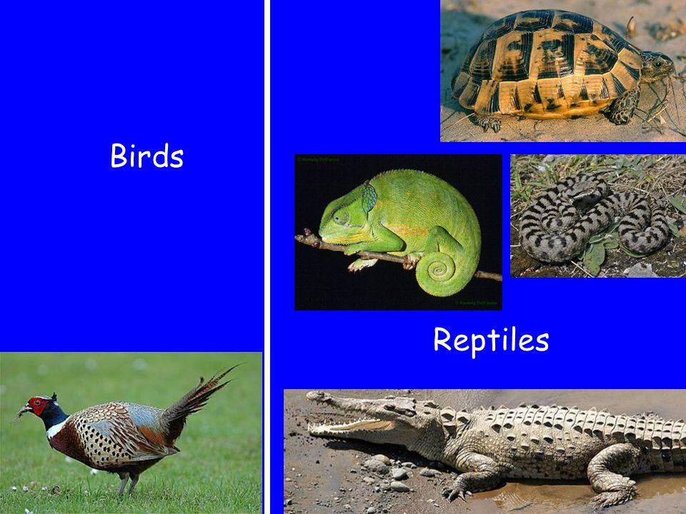 Birds Reptiles