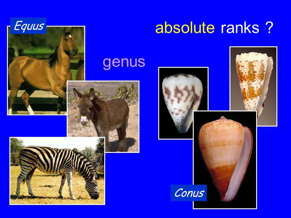 absolute ranks ? Equus Conus genus