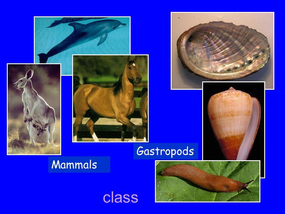 Mammals Gastropods class