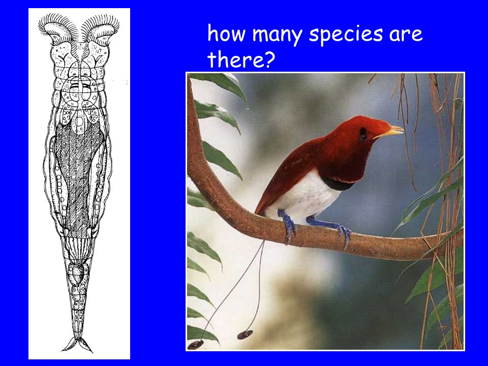 how many species are there