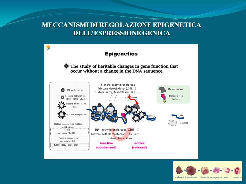 MECCANISMI DI REGOLAZIONE EPIGENETICA DELLESPRESSIONE GENICA