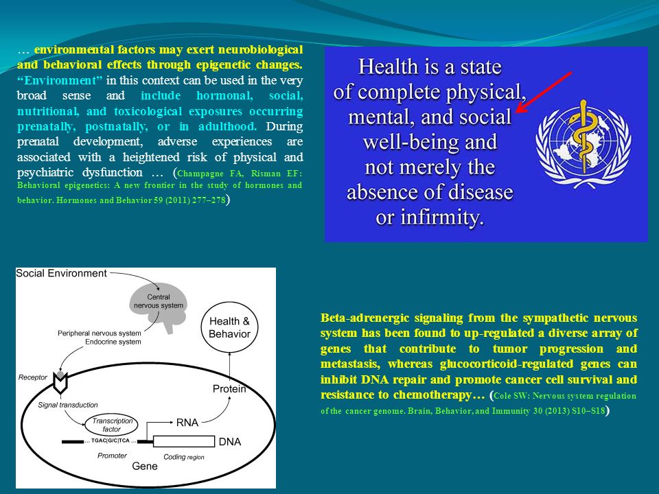 … environmental factors may exert neurobiological and behavioral effects through epigenetic changes.