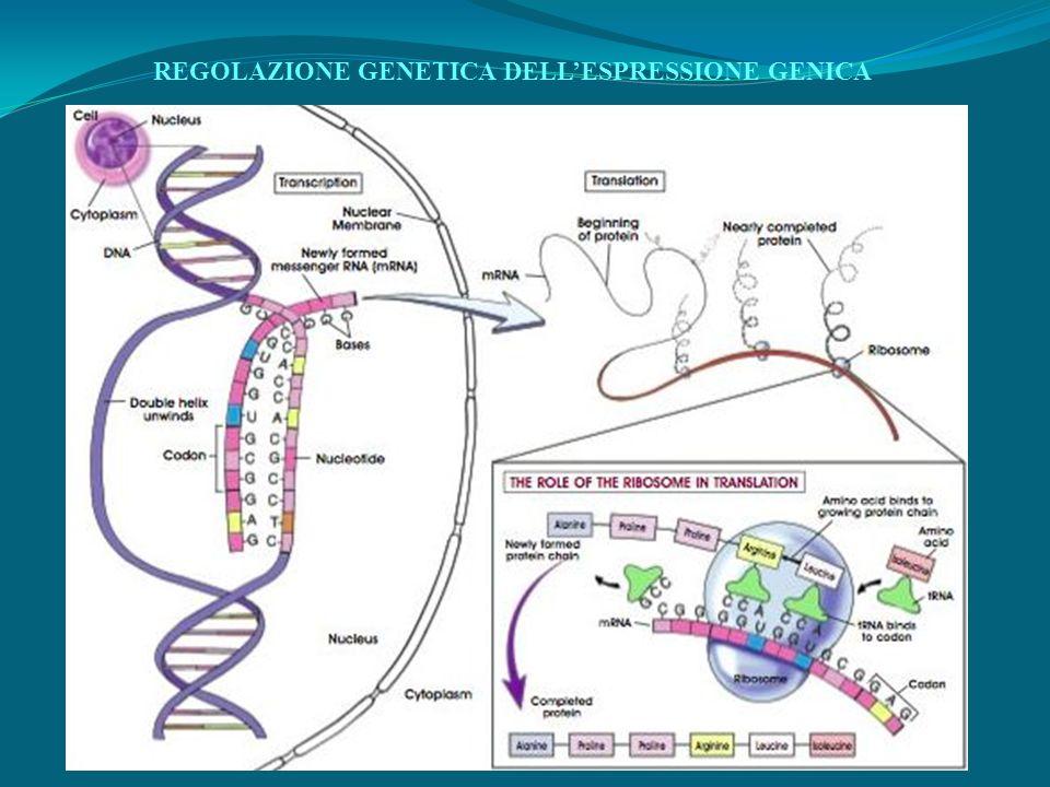 REGOLAZIONE GENETICA DELLESPRESSIONE GENICA