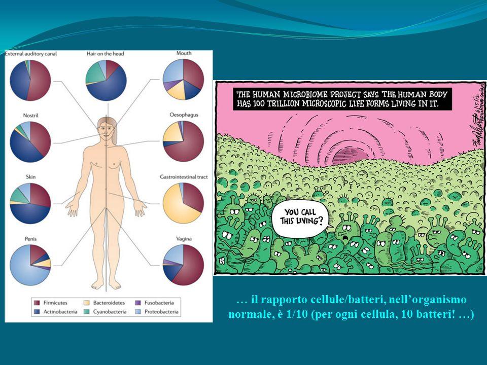 … il rapporto cellule/batteri, nellorganismo normale, è 1/10 (per ogni cellula, 10 batteri! …)