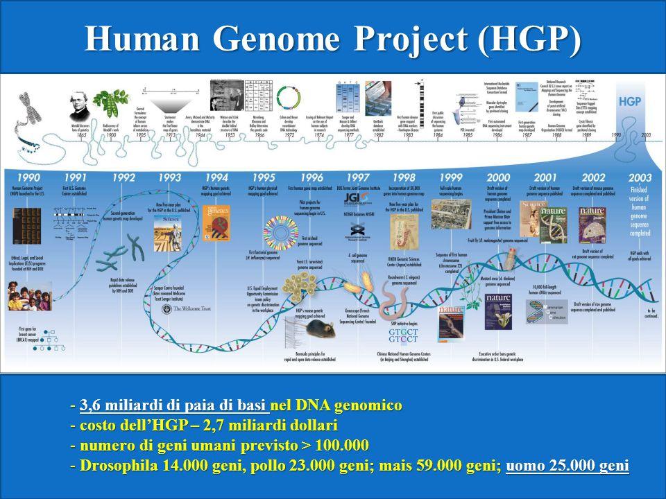 Human Genome Project (HGP) - 3,6 miliardi di paia di basi nel DNA genomico - costo dellHGP – 2,7 miliardi dollari - numero di geni umani previsto > 100.000 - Drosophila 14.000 geni, pollo 23.000 geni; mais 59.000 geni; uomo 25.000 geni