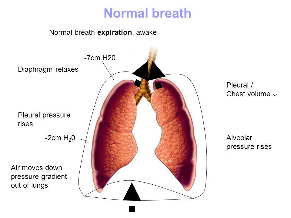 Normal breath expiration, awake Diaphragm relaxes Pleural / Chest volume Pleural pressure rises Normal breath Alveolar pressure rises Air moves down p