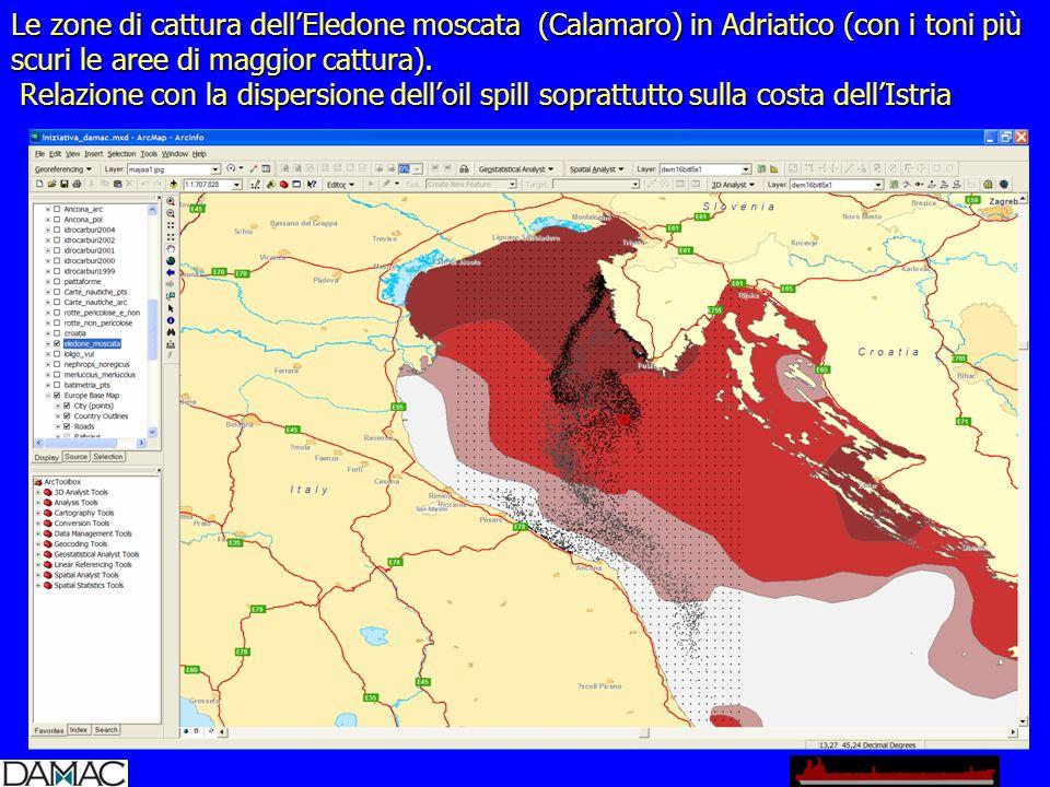Le zone di cattura dellEledone moscata (Calamaro) in Adriatico (con i toni più scuri le aree di maggior cattura).