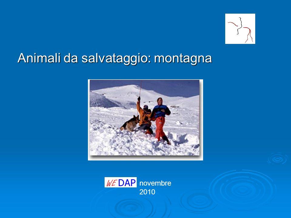 novembre 2010 Animali da salvataggio: montagna
