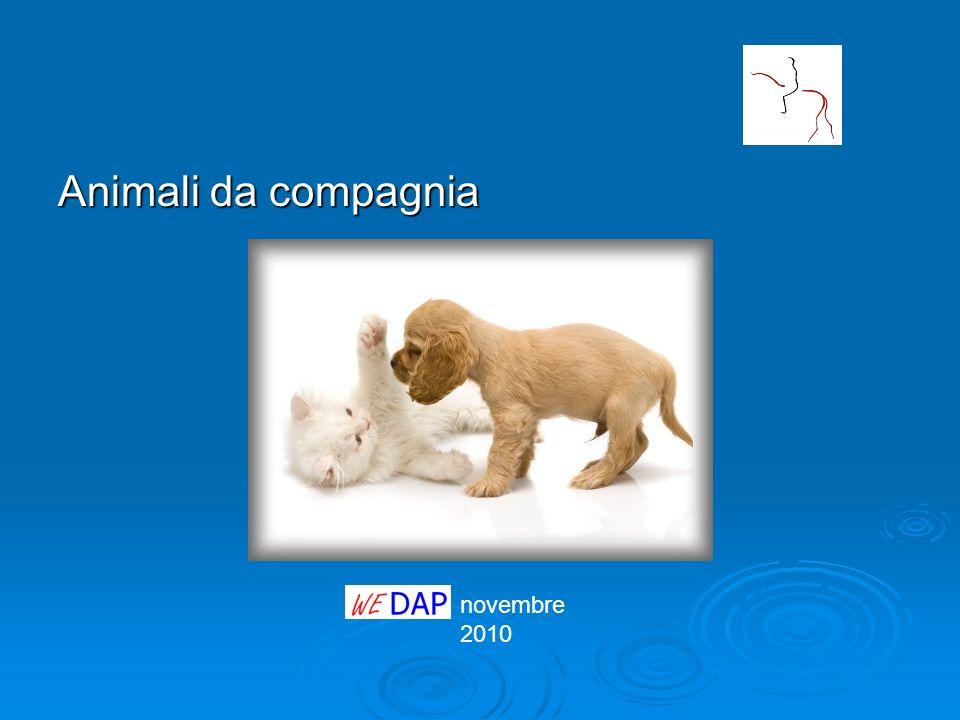 novembre 2010 Animali da compagnia