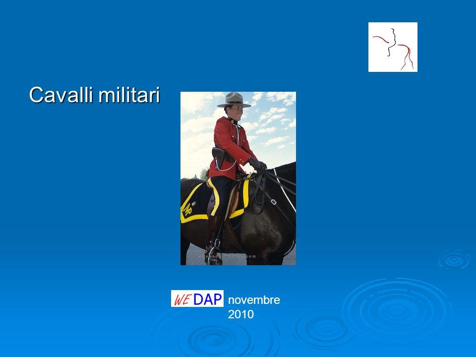 novembre 2010 Cavalli militari