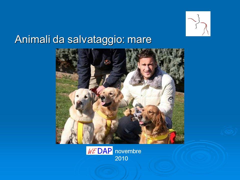 novembre 2010 Animali da salvataggio: mare