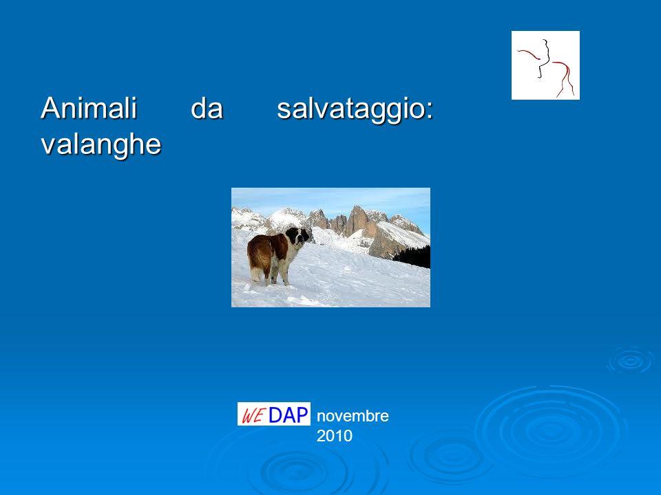 novembre 2010 Animali da salvataggio: valanghe