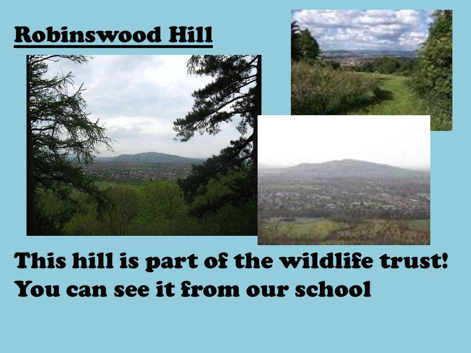 Robinswood Hill This hill is part of the wildlife trust! You can see it from our school