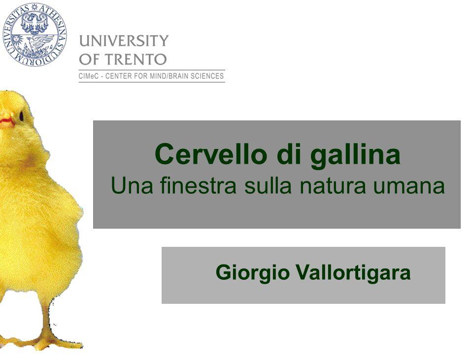 Giorgio Vallortigara Cervello di gallina Una finestra sulla natura umana