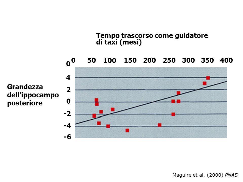 Maguire et al. (2000) PNAS Tempo trascorso come guidatore di taxi (mesi) Grandezza dellippocampo posteriore 050 100 150200250300350400 0 4 2 0 -2 -4 -