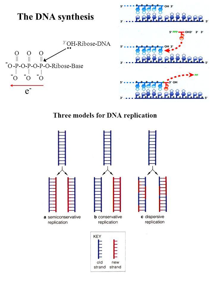 The DNA synthesis -P-O-P-O-P-O-Ribose-Base -O-O -O-O -O-O -O-O || | | | OO O 3 OH-Ribose-DNA e-e-.. Three models for DNA replication