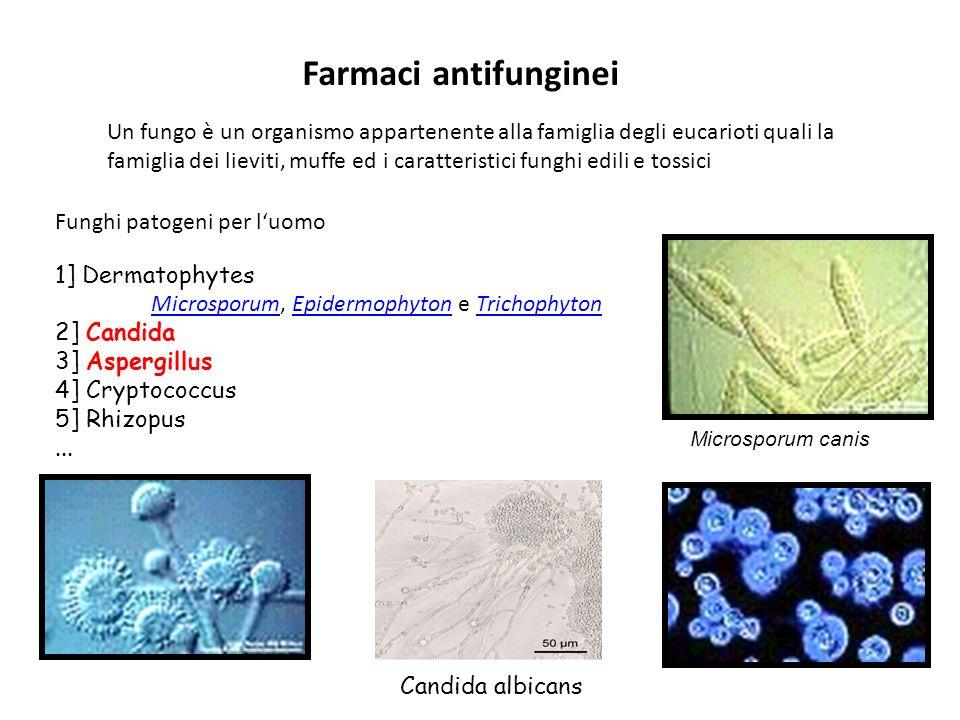Farmaci antifunginei 1] Dermatophytes MicrosporumMicrosporum, Epidermophyton e TrichophytonEpidermophytonTrichophyton 2] Candida 3] Aspergillus 4] Cry
