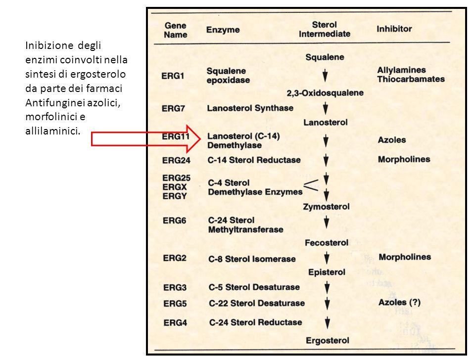 Inibizione degli enzimi coinvolti nella sintesi di ergosterolo da parte dei farmaci Antifunginei azolici, morfolinici e allilaminici.