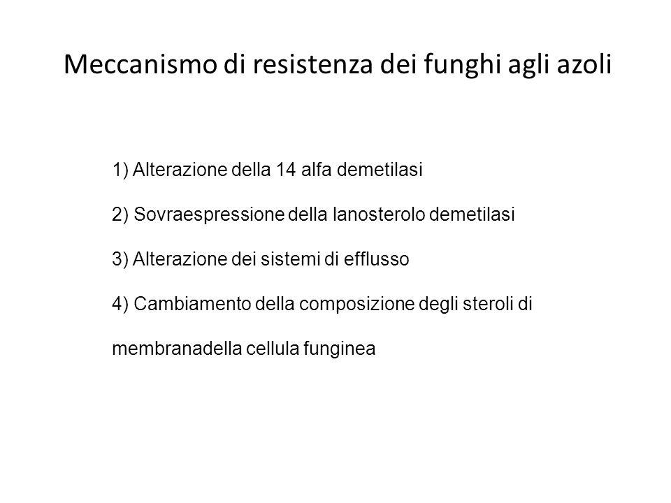 Meccanismo di resistenza dei funghi agli azoli 1) Alterazione della 14 alfa demetilasi 2) Sovraespressione della lanosterolo demetilasi 3) Alterazione