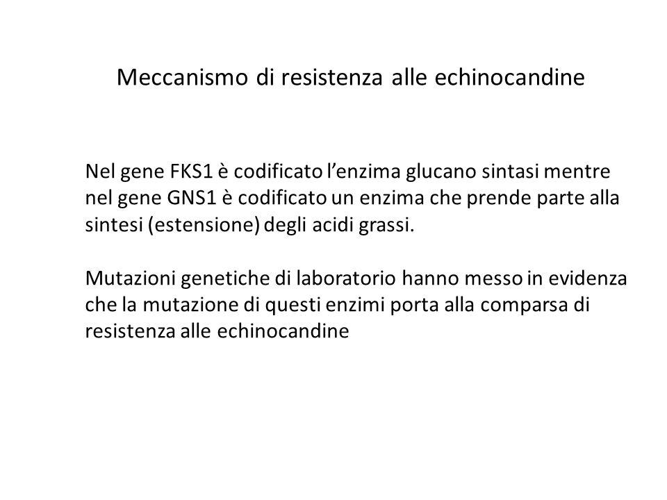 Meccanismo di resistenza alle echinocandine Nel gene FKS1 è codificato lenzima glucano sintasi mentre nel gene GNS1 è codificato un enzima che prende