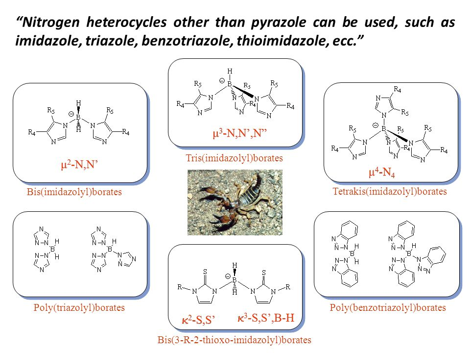 Nitrogen heterocycles other than pyrazole can be used, such as imidazole, triazole, benzotriazole, thioimidazole, ecc. Bis(imidazolyl)borates Tris(imi