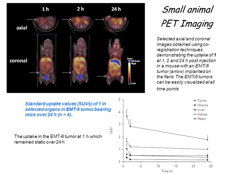 Small animal PET Imaging Selected axial and coronal images obtained using co- registration techniques demonstrating the uptake of 1 at 1, 2 and 24 h p